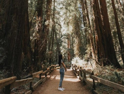 How to make your forest bathing count