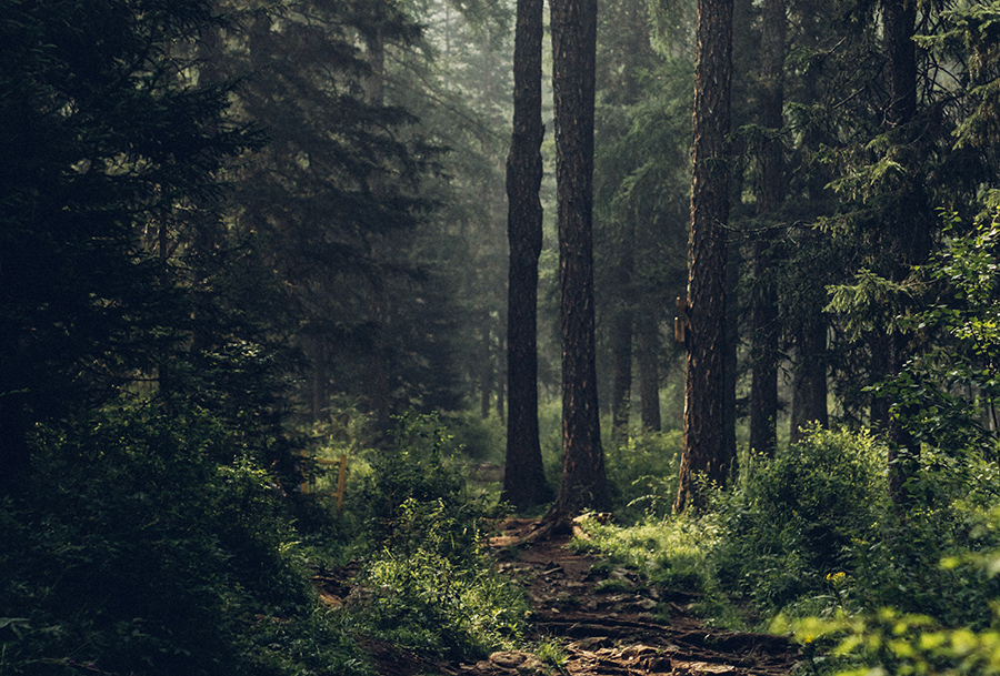 Forest Bathing 101